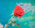 """【华友资讯】华友举办""""追梦•芳华""""珠宝品鉴与理财沙龙"""